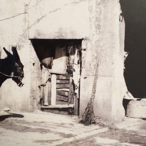 taverna storica8bis